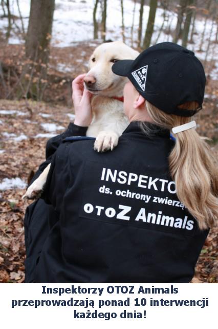 Inspektorka z widocznym napisem OTOZ Animals trzymająca jasnego kundelka.